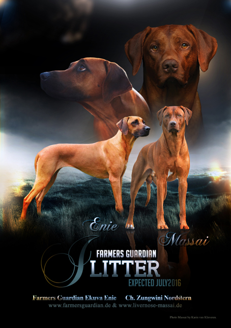 plakat_litter_web